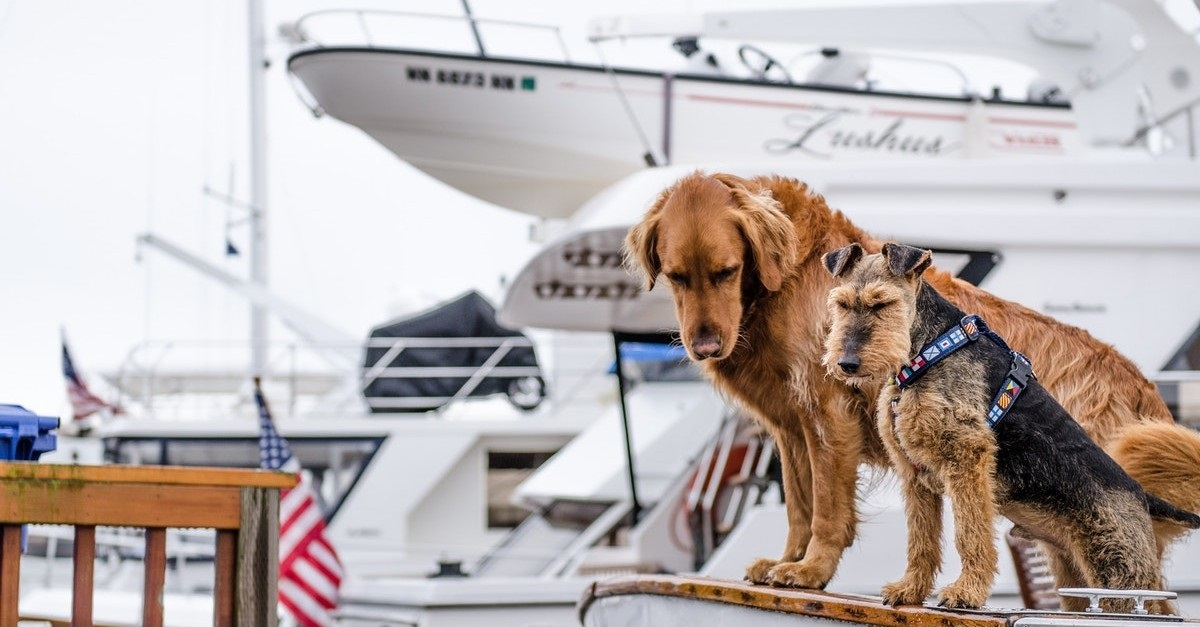 Things to Do at Palm Beach International Boat Show 2019
